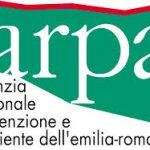 arp (1)